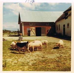 Jag och grisarna 1967