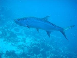 Bonaire HS