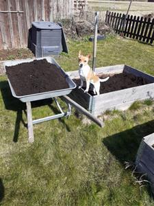 Den lille trädgårdsmästaren