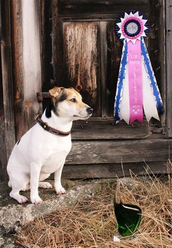 Årets Viltspårhund