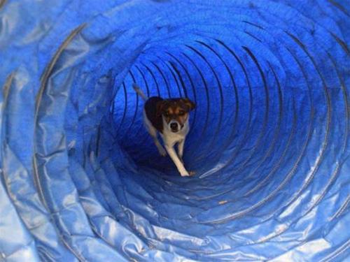 Wilgot_tunell