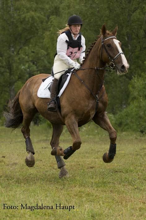 Susanne häst