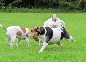 Vår lilla hundfamilj