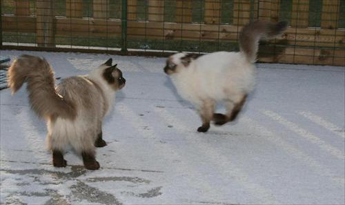 Sweet & Spirit i snön