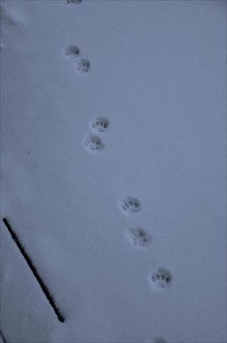 spår i snö