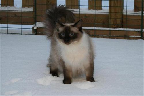Spirit i snön