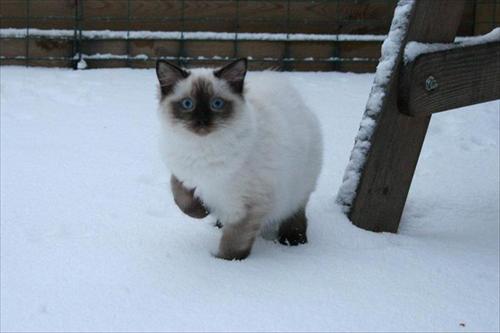Sweet i snön