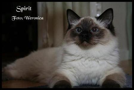 Spirit honor