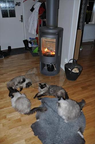 värmer sig