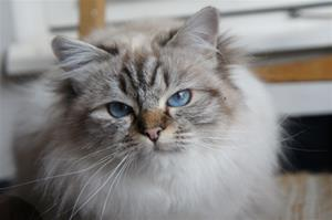 IC Princess Adeliz av Ontario*N SBI b född 22/10-15 (2,4 år))