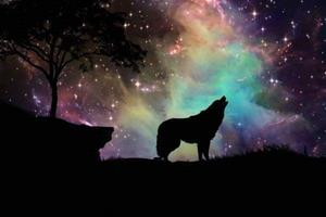 starry-night-wolf-paint-with-diamonds-bfcm-fall-sale-fantasy-halloween-landscape_646