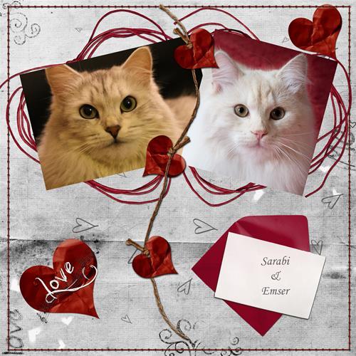 Sarabi & Emser