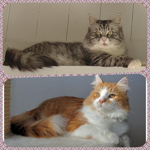 Daisy och Zhivas