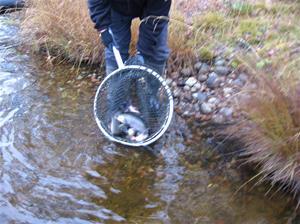 fiskutsättning lilldigerl. 2014-1020 143
