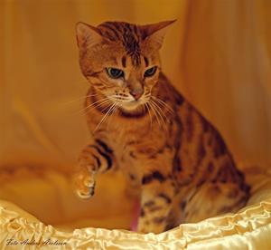 katt4