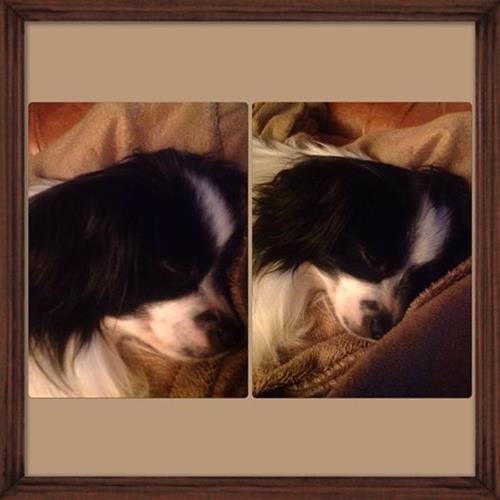 calvin sover