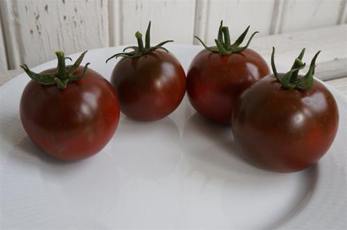 Tomat `Sacher´.