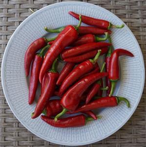 Chilipeppar `Cyklon´