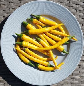 Chilipeppar `Hot Stuff´