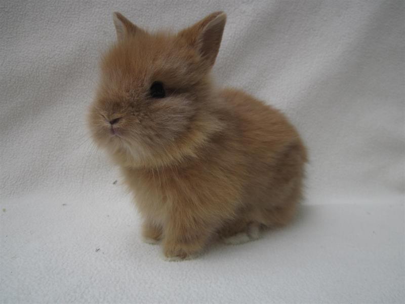 hyra kanin värmdö
