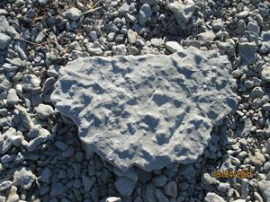 En fossil. IMG_1516