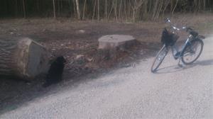 Loke och jag på cykeltur 2015 04 24. Tar kort av förut nämnda träd. DSC_0006