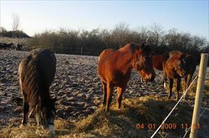 Hästarna blir glada