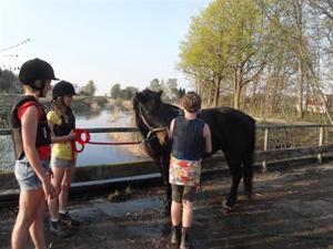 Hästbad