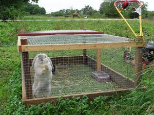 kaninernas nya sommarbur