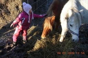 Hälsar på hästarna