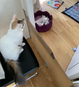 Mimmi och Moko