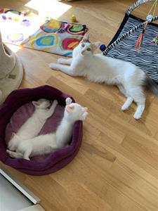 Mimmi och 3 ungar