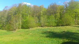 Bokskogen börjar grönska