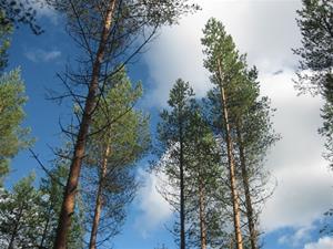 Nygallrad skog