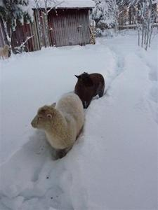 Cinderella och Canel december 2010