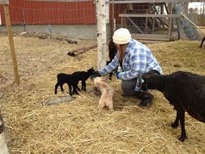Camilla och Milou i fårhagen
