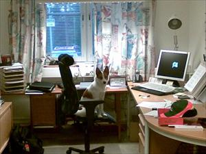 Tintin på jobbet