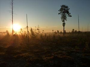 soluppgång vid Fällträsket 22 aug 09