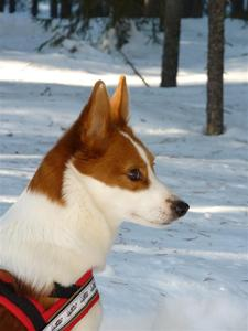 Tintin mars 2010