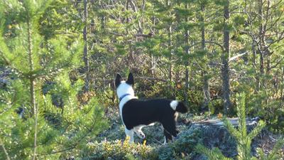 Azzar spanar över framtida jaktmarker - 9 oktober 2011