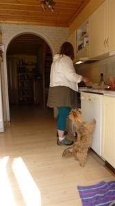 Jag hjälper matte med köksarbetet