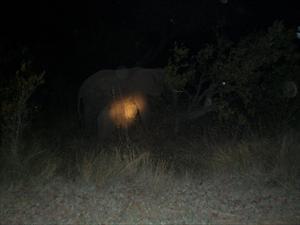 diande elefantunge på natturen från Berg en Dal