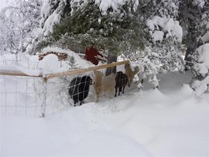 Fårhagen januari 2011