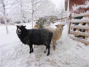Mia och Cinderella januari 2011