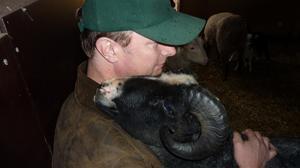 Doc - baggen till alla lamm 2012. Trevlig nästan jämt