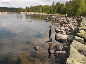 fiske i Arjeplog midsommarhelgen