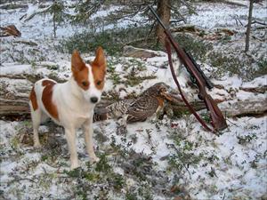 Tintins första tjäder