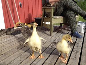 Hans och Greta kommer till gården