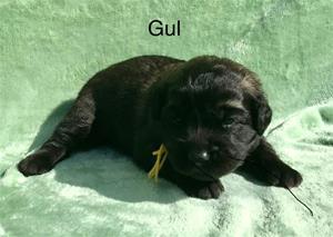 T_2_gul_1