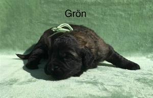 T_2_gron_1